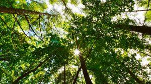 木の香る都市(まち)づくり事業